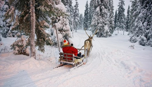 A Yule Goat in Finnish Lapland