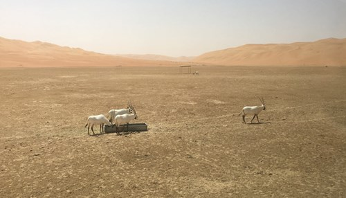 Unicorns Return to the Rub' al-Khali