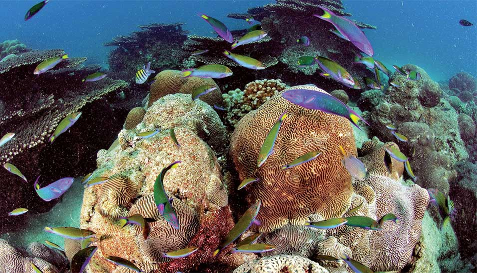 Increasing Efforts to Protect and Enhance Coral Reefs